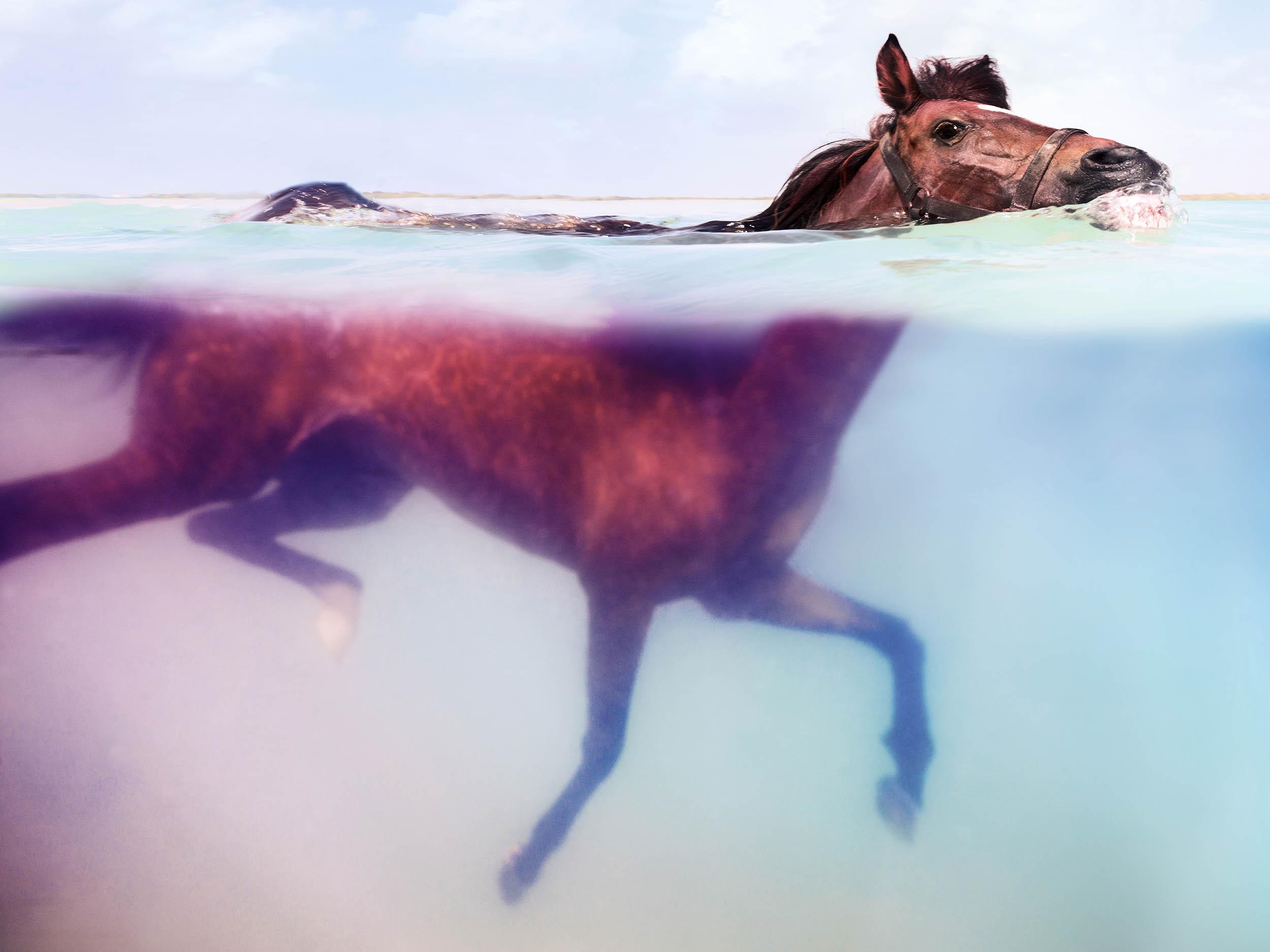 paard onderwater foto